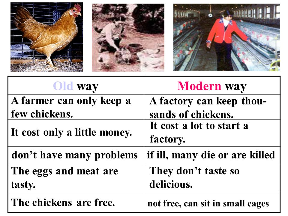 Old Way Modern A Farmer Can Only Keep Few Chickens In The