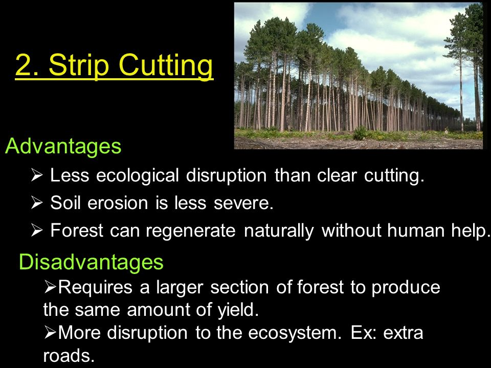 disadvantages of forest