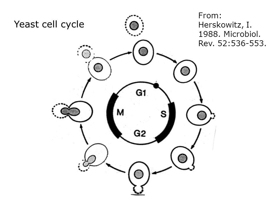 Genetics Of Mating Incompatibility In Fungi Bio341f