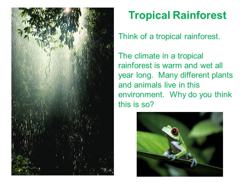 Tropical Rainforest Think of a tropical rainforest.
