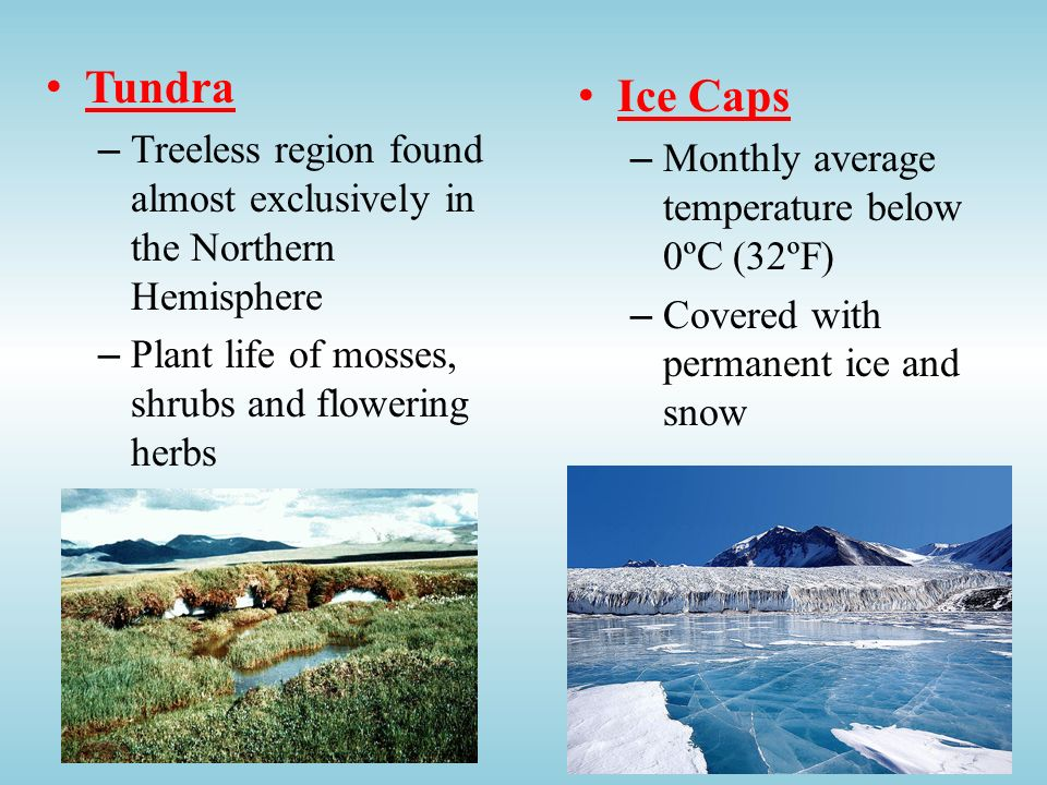 Tundra Treeless region found almost exclusively in the Northern Hemisphere. Plant life of mosses, shrubs and flowering herbs.