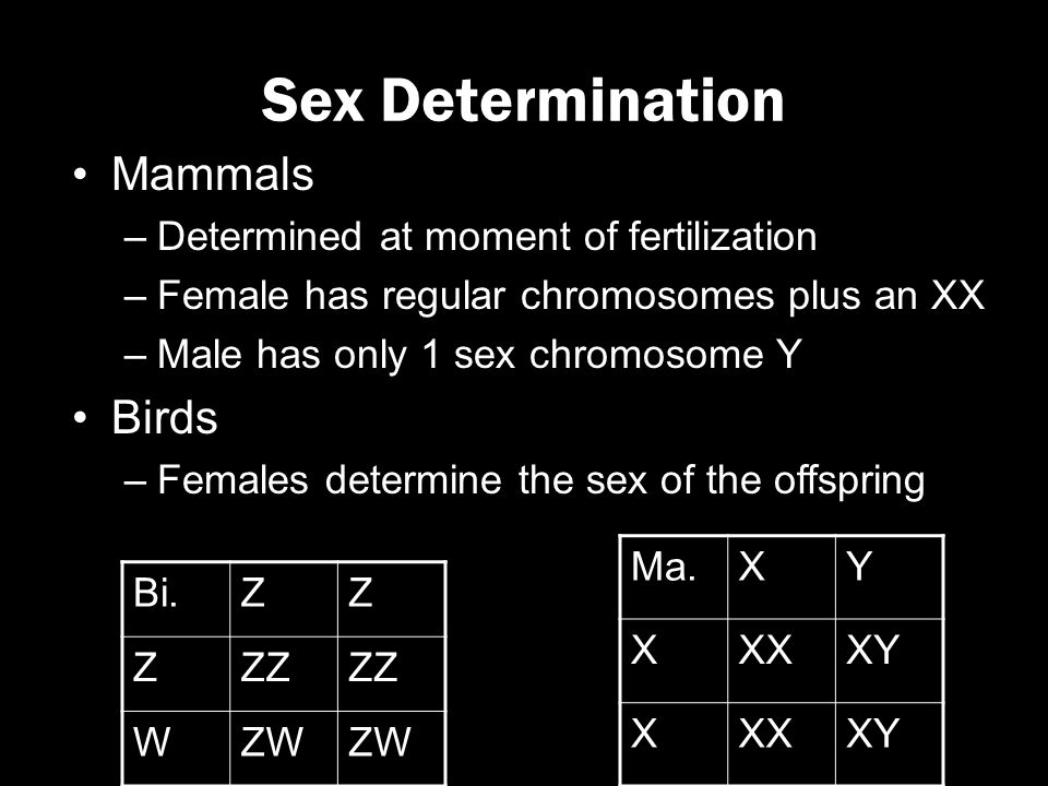 At what moment is sex determined