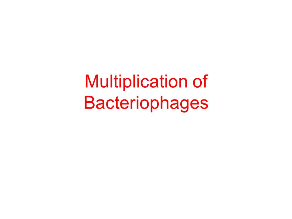 Multiplication of Bacteriophages