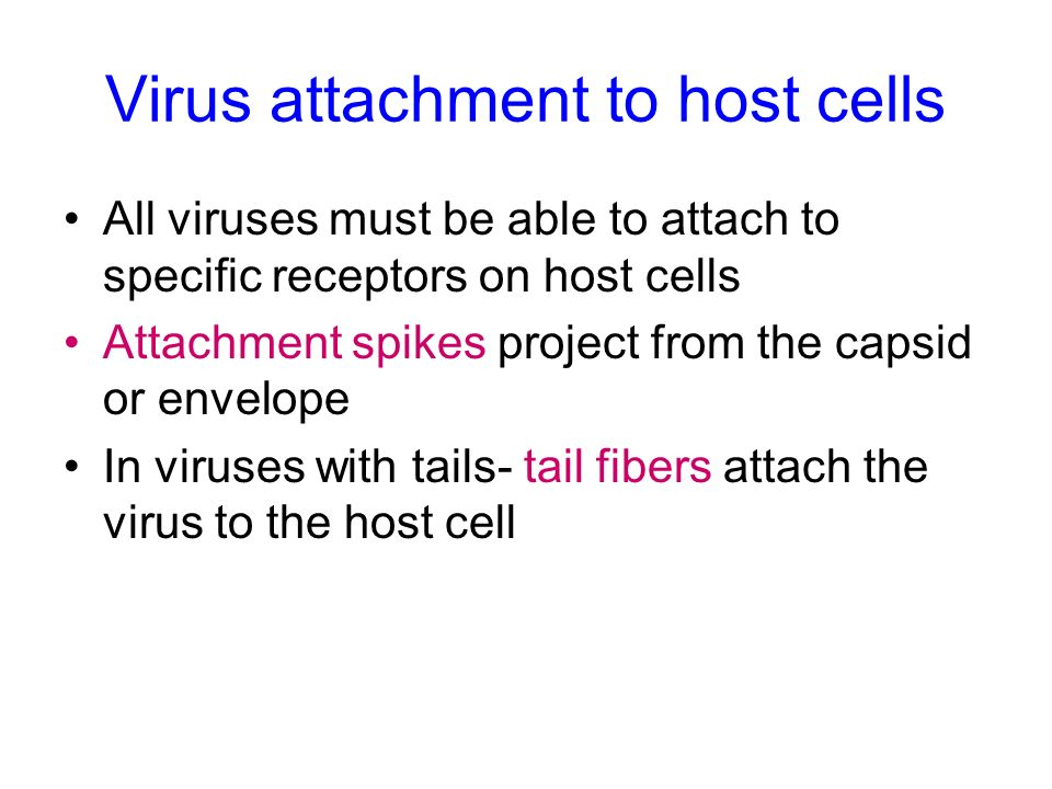 Virus attachment to host cells