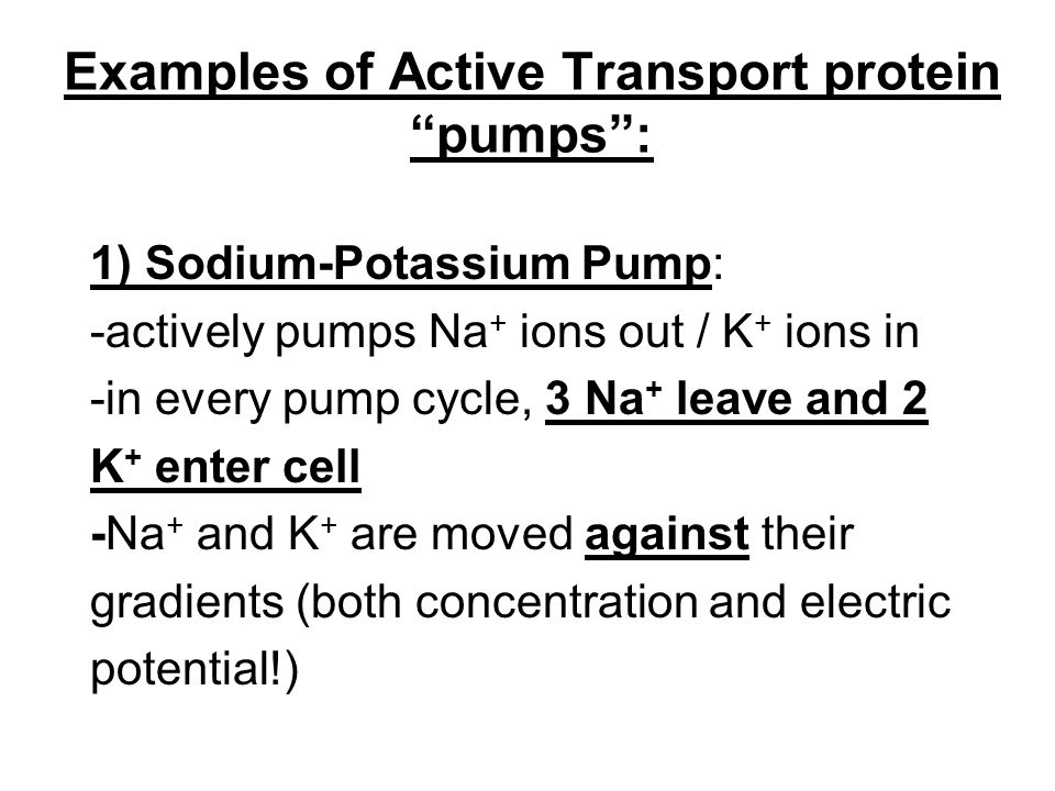Notes Ch 7 Part 2 Transport Across The Cell Membrane Ppt