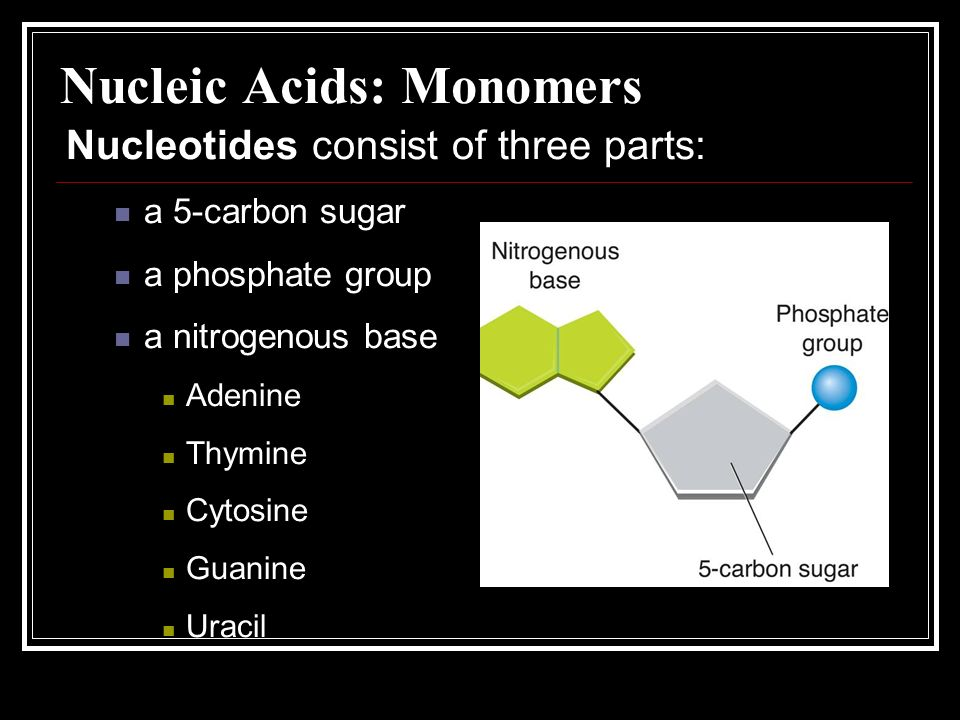 Nucleic Acids: Monomers