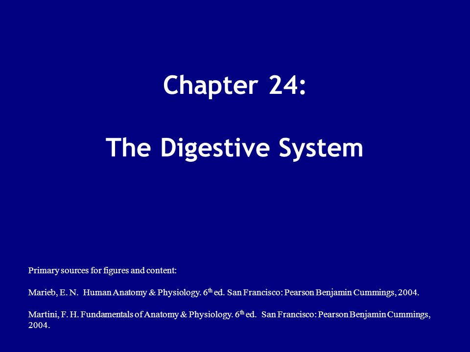 Chapter 24: The Digestive System - ppt download
