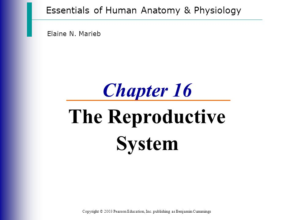 Chapter 16 The Reproductive System - ppt download