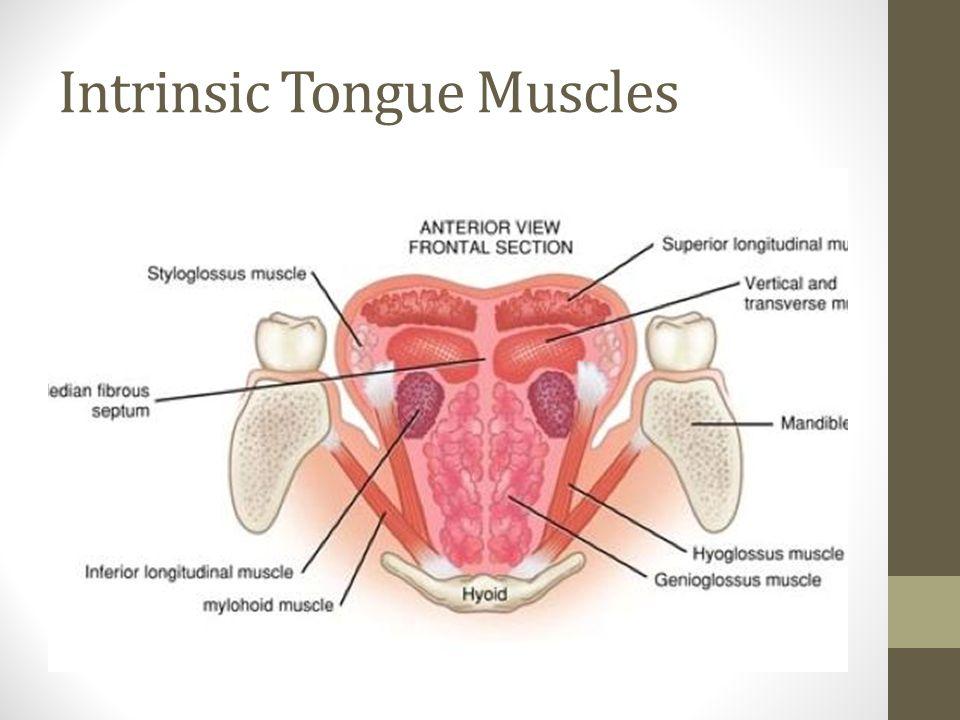 Tongue Diagram Anterior - Circuit Connection Diagram •
