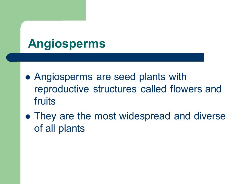 Angiosperms Angiosperms are seed plants with reproductive structures called flowers and fruits.
