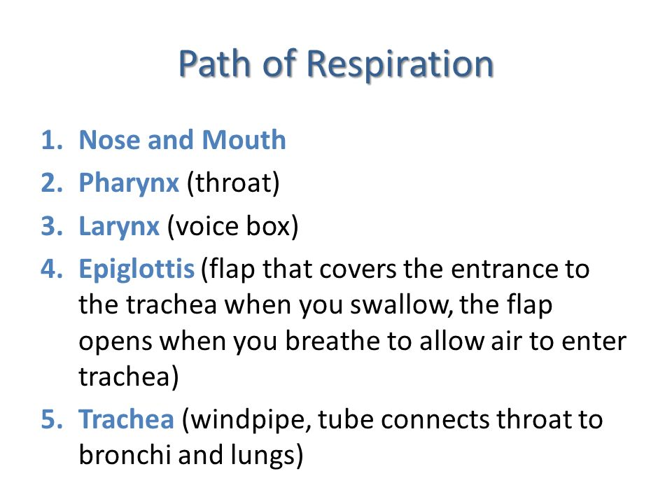 Path of Respiration Nose and Mouth Pharynx (throat) Larynx (voice box)