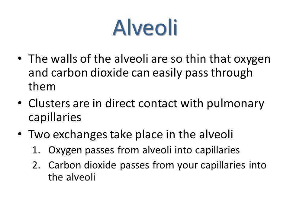 Alveoli The walls of the alveoli are so thin that oxygen and carbon dioxide can easily pass through them.