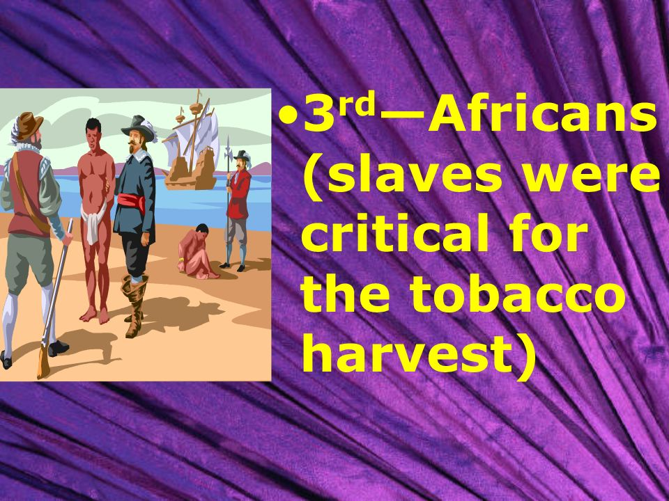 3rd—Africans (slaves were critical for the tobacco harvest)