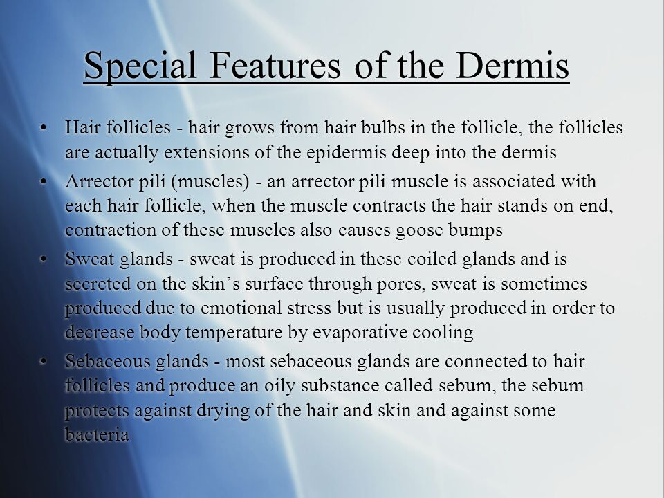 Special Features of the Dermis