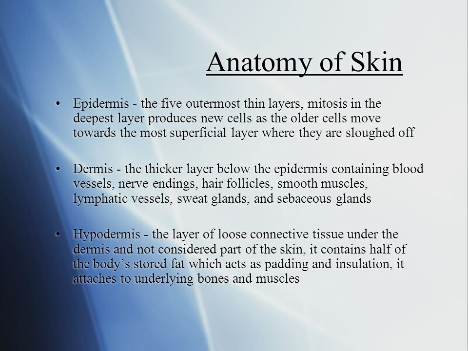 Anatomy of Skin