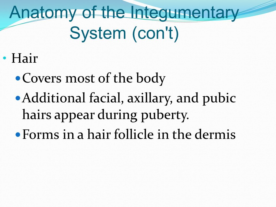 Anatomy of the Integumentary System (con t)