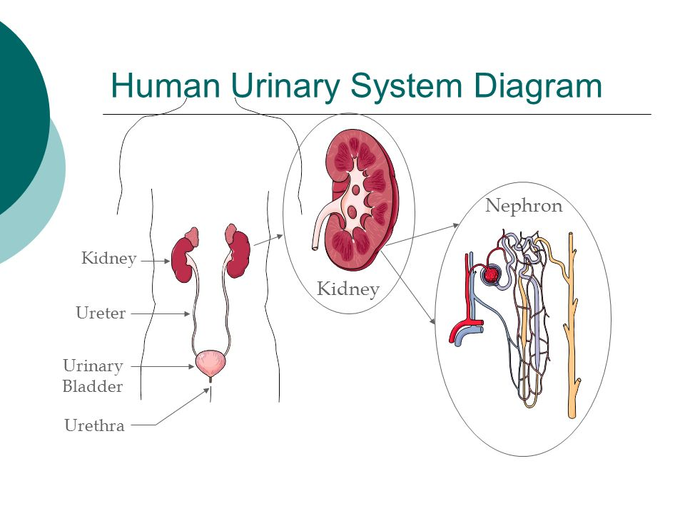 L5 Human Systems overview - ppt download