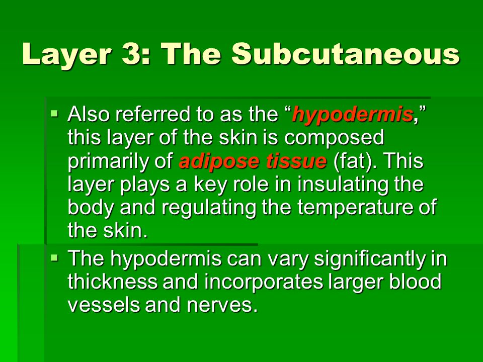 Layer 3: The Subcutaneous