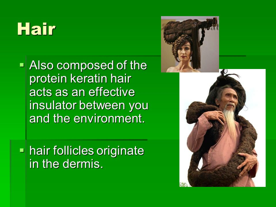Hair Also composed of the protein keratin hair acts as an effective insulator between you and the environment.