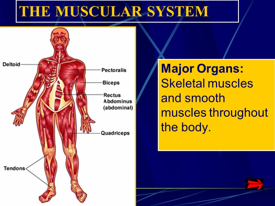 Systems Of The Human Body Ppt Video Online Download