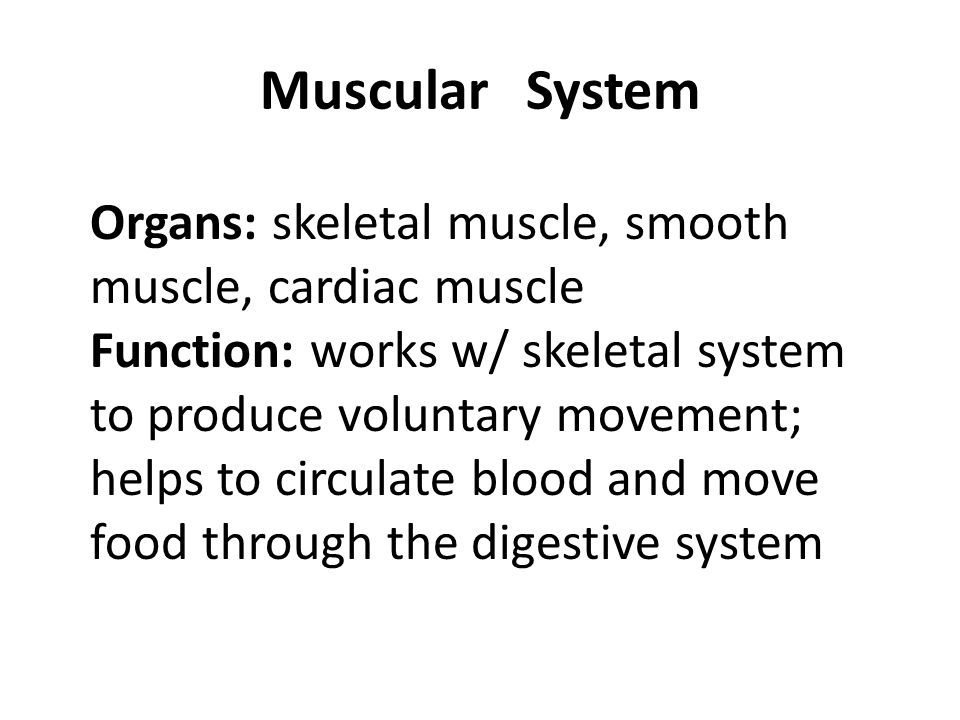 Muscular System Organs: skeletal muscle, smooth muscle, cardiac muscle