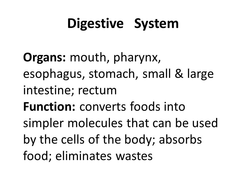 Digestive System Organs: mouth, pharynx, esophagus, stomach, small & large intestine; rectum.