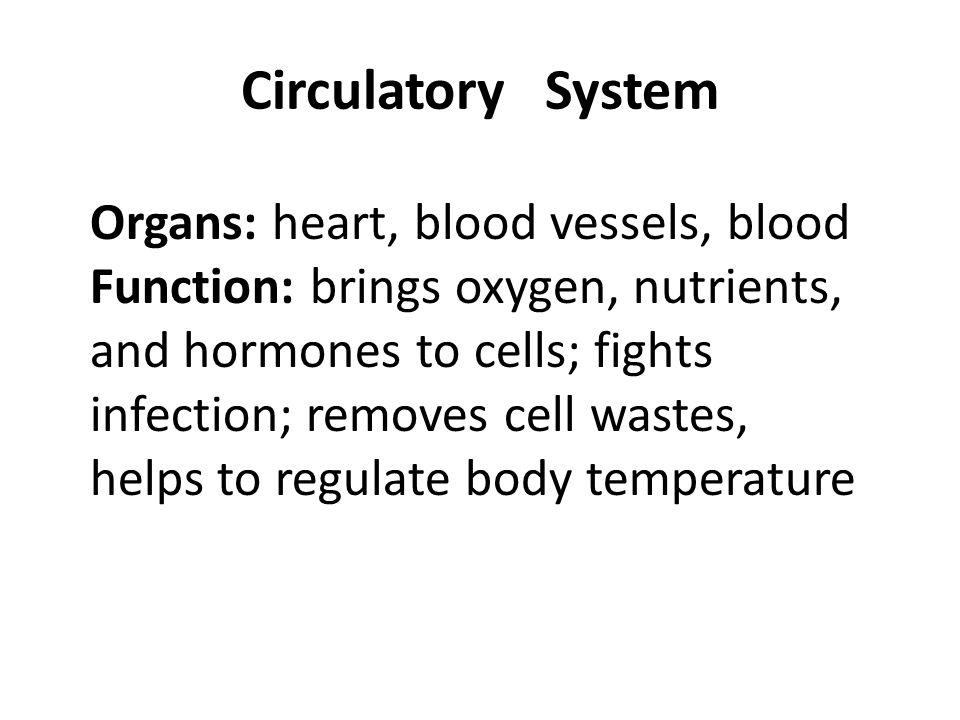 Circulatory System Organs: heart, blood vessels, blood