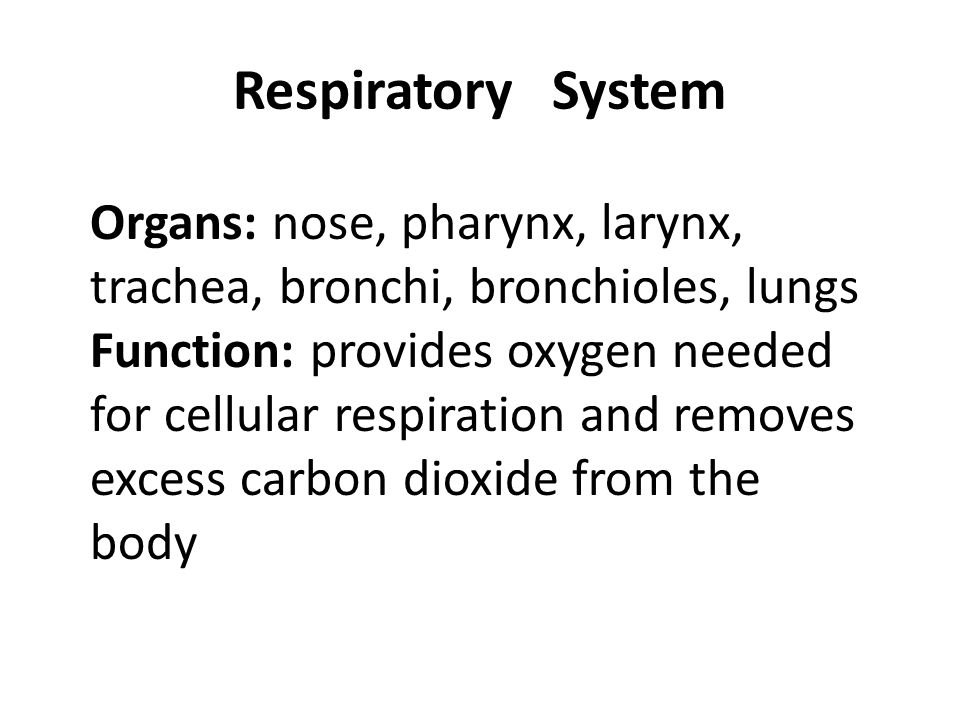 Respiratory System Organs: nose, pharynx, larynx, trachea, bronchi, bronchioles, lungs.