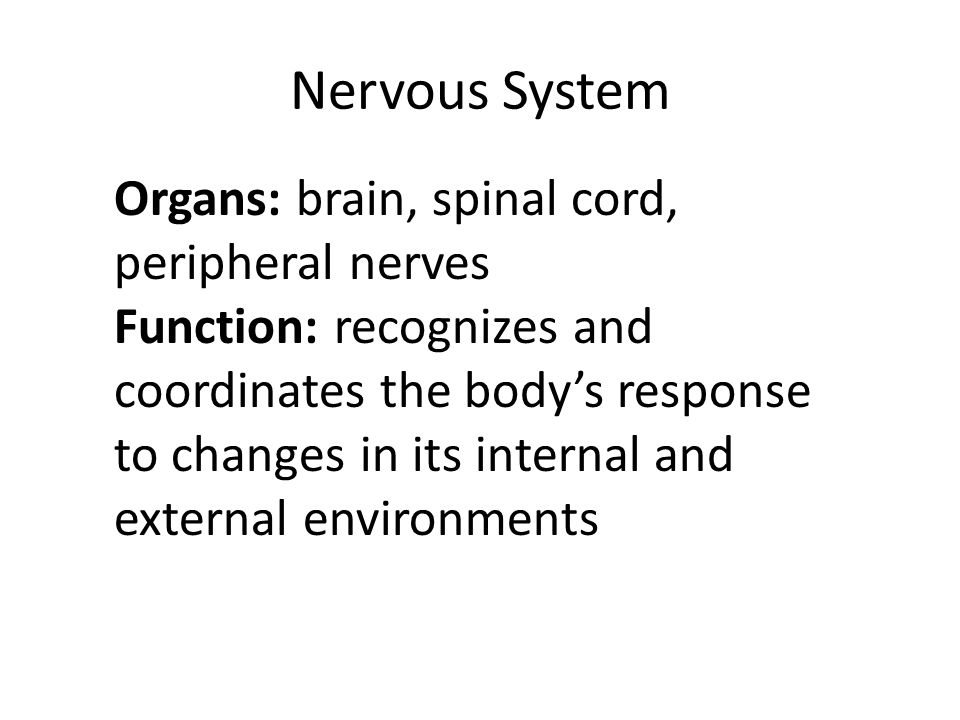 Nervous System Organs: brain, spinal cord, peripheral nerves