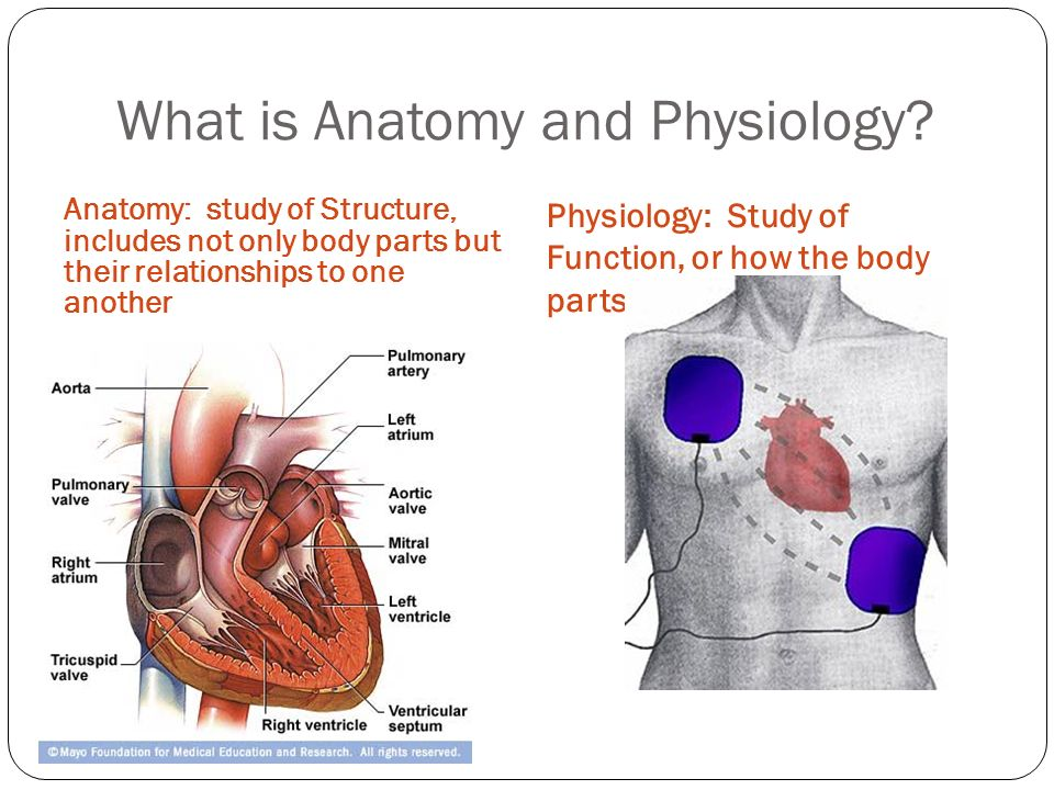 Human Anatomy And Physiology I Ppt Video Online Download