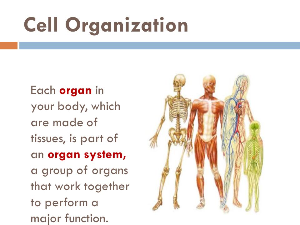 Unit 10 Human Body Systems - ppt video online download