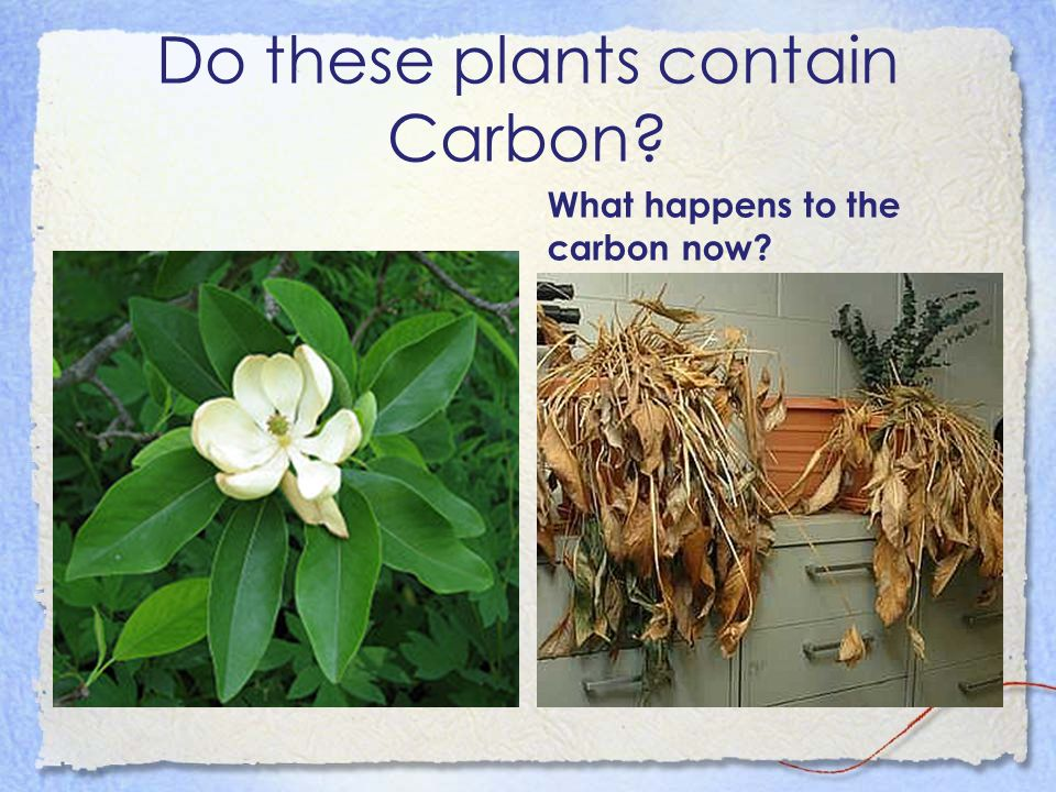 Do these plants contain Carbon