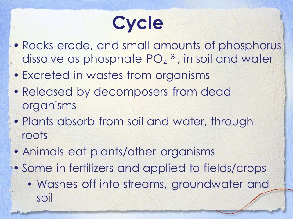 Cycle Rocks erode, and small amounts of phosphorus dissolve as phosphate PO4 3-, in soil and water.