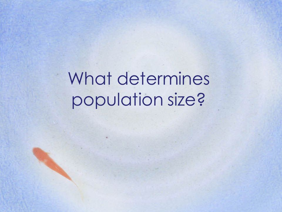 What determines population size