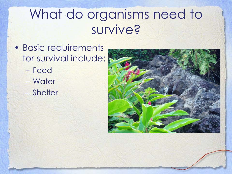 What do organisms need to survive