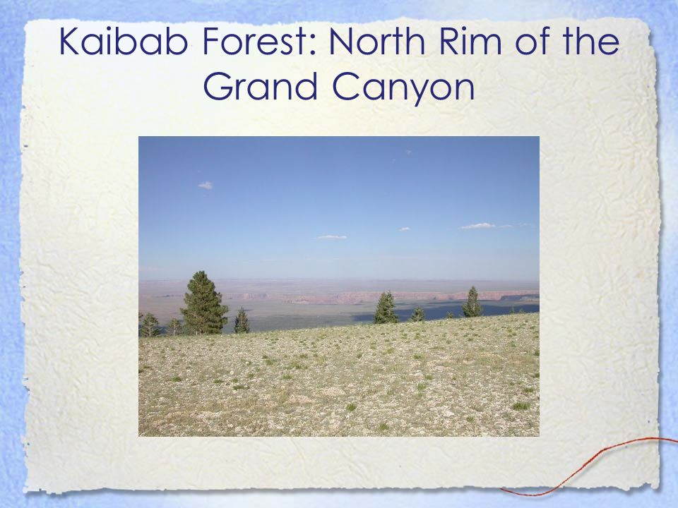Kaibab Forest: North Rim of the Grand Canyon
