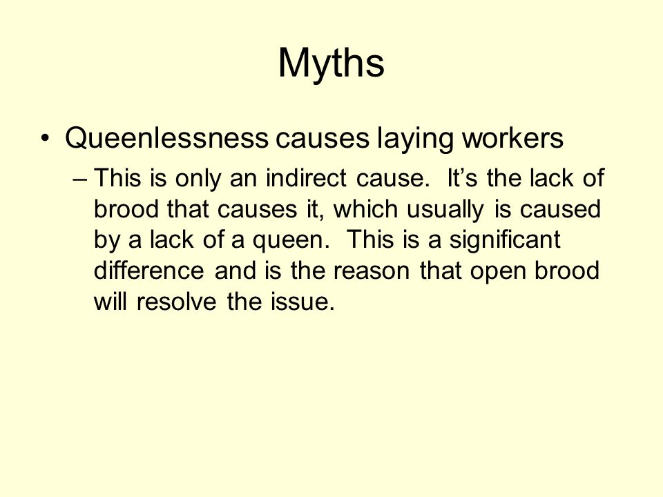 Myths Queenlessness causes laying workers