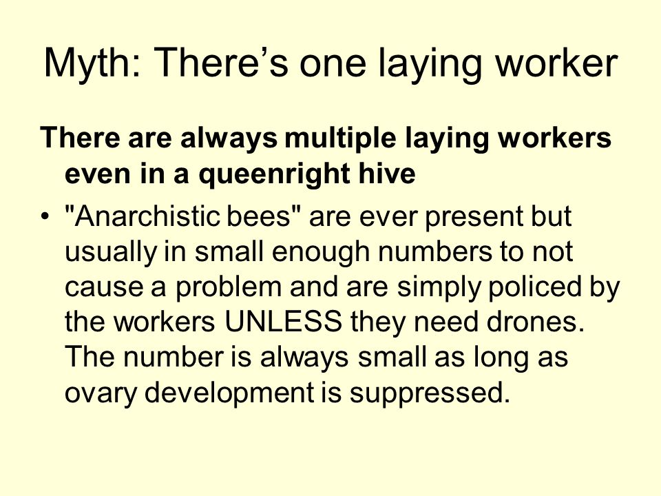 Myth: There's one laying worker