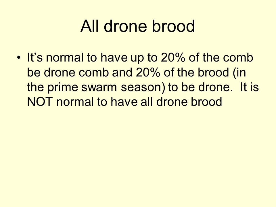 All drone brood