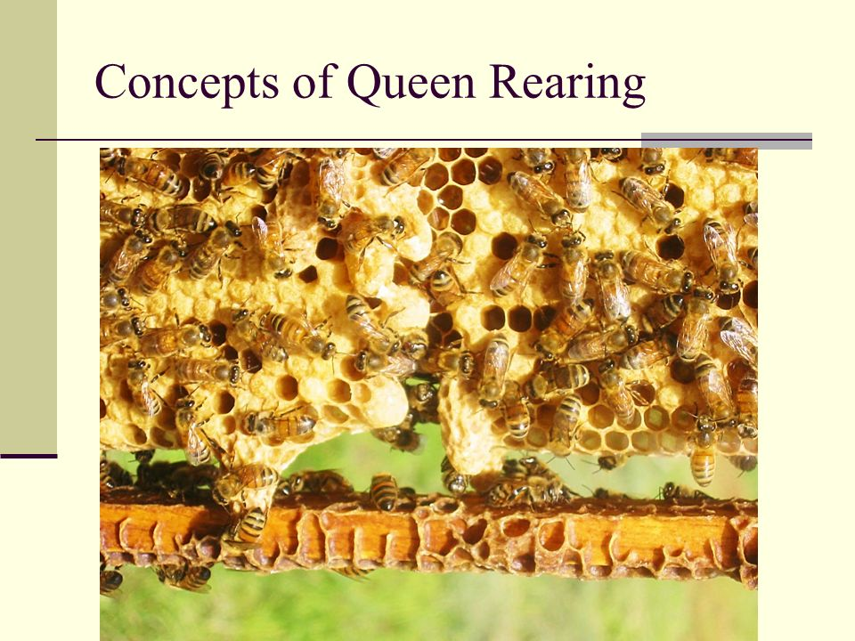 Concepts of Queen Rearing