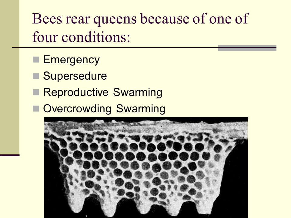 Bees rear queens because of one of four conditions: