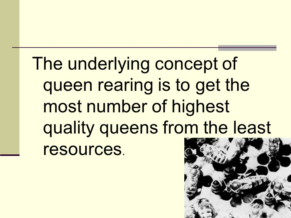 The underlying concept of queen rearing is to get the most number of highest quality queens from the least resources.