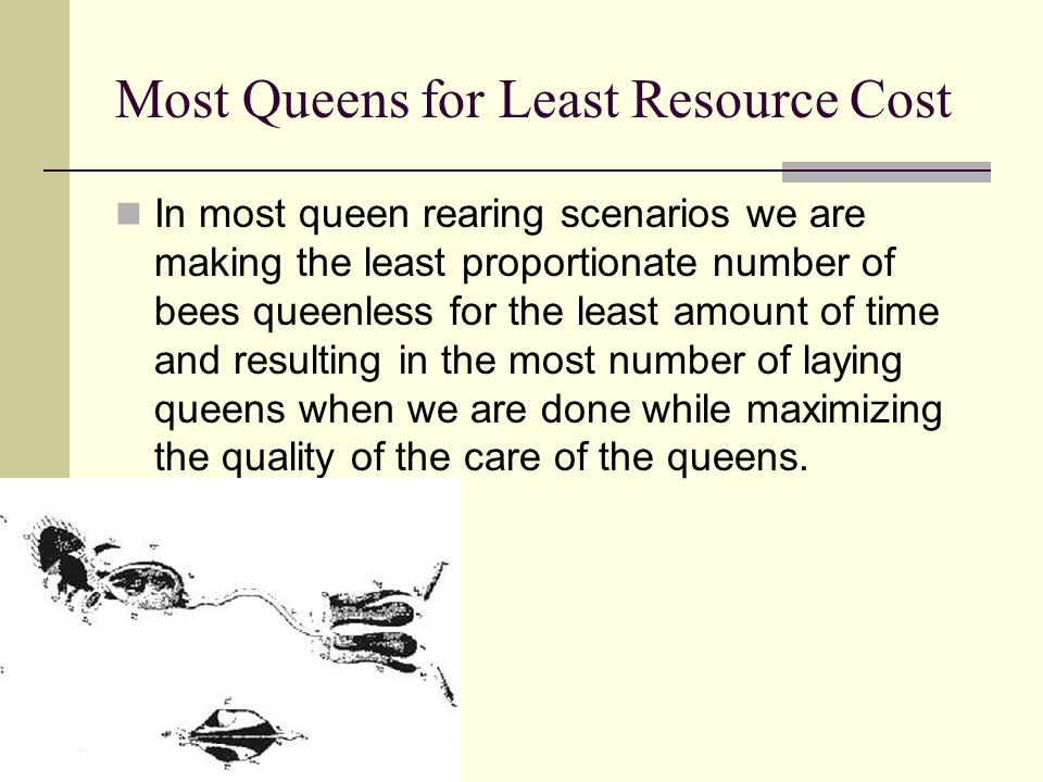 Most Queens for Least Resource Cost