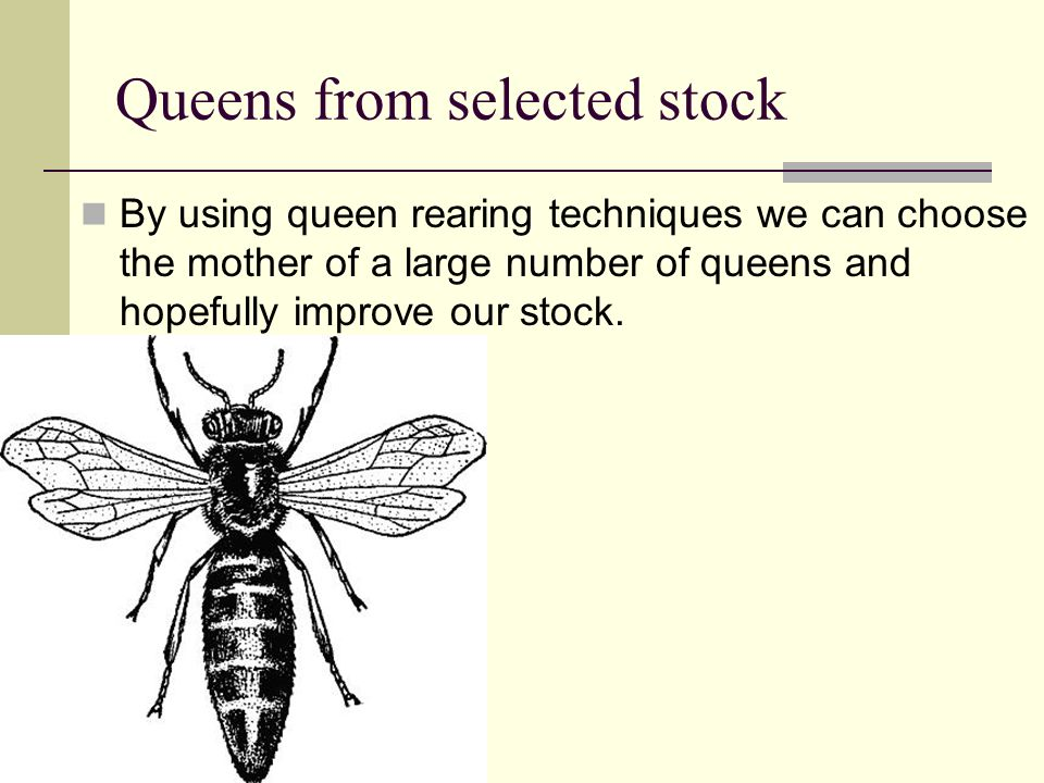 Queens from selected stock