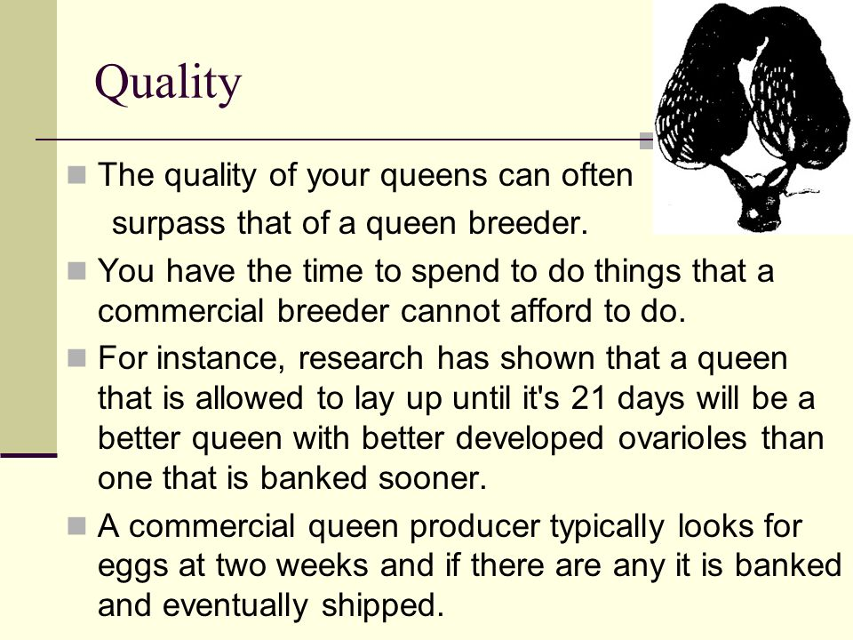 Quality The quality of your queens can often