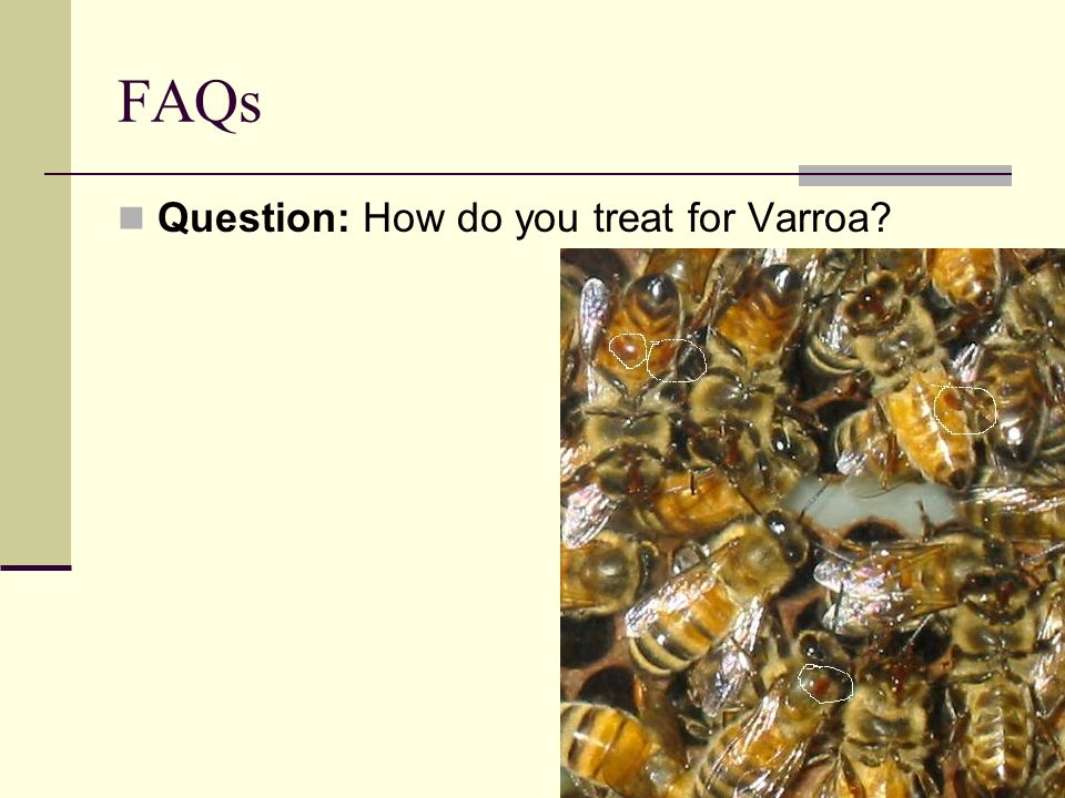 FAQs Question: How do you treat for Varroa