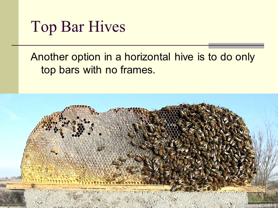Top Bar Hives Another option in a horizontal hive is to do only top bars with no frames.