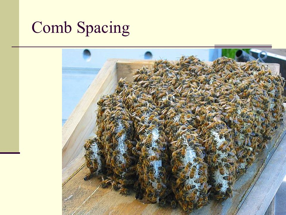Comb Spacing