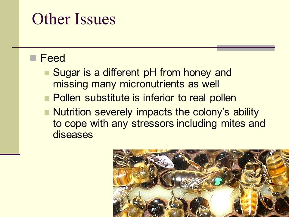 Other Issues Feed. Sugar is a different pH from honey and missing many micronutrients as well. Pollen substitute is inferior to real pollen.