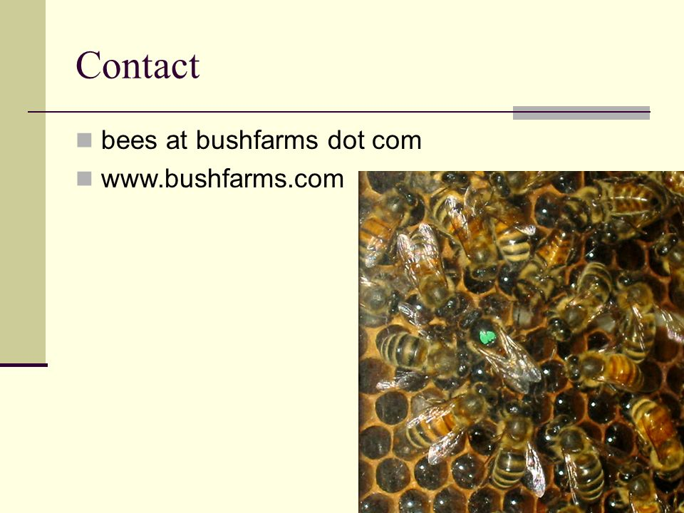 Contact bees at bushfarms dot com www.bushfarms.com